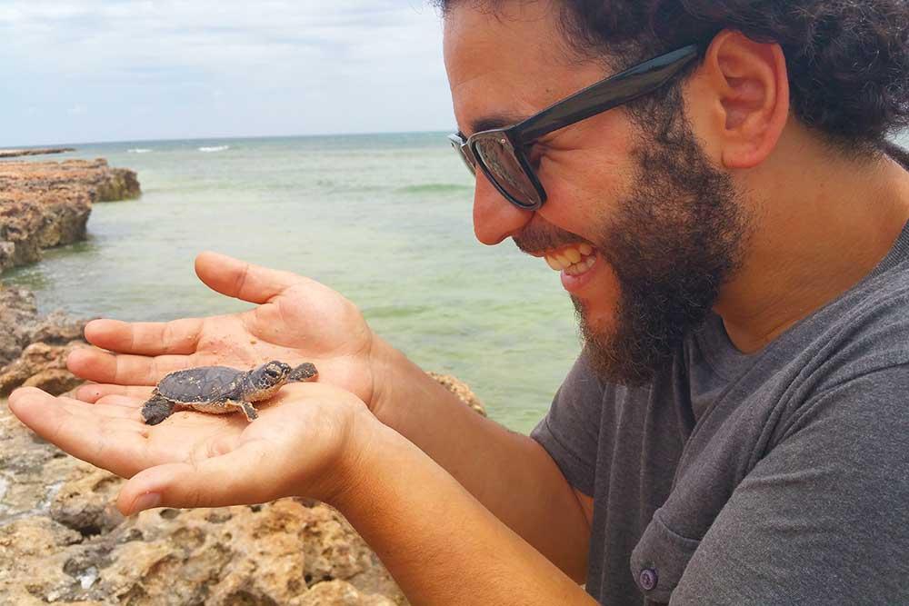 Tartarughe marine Australia