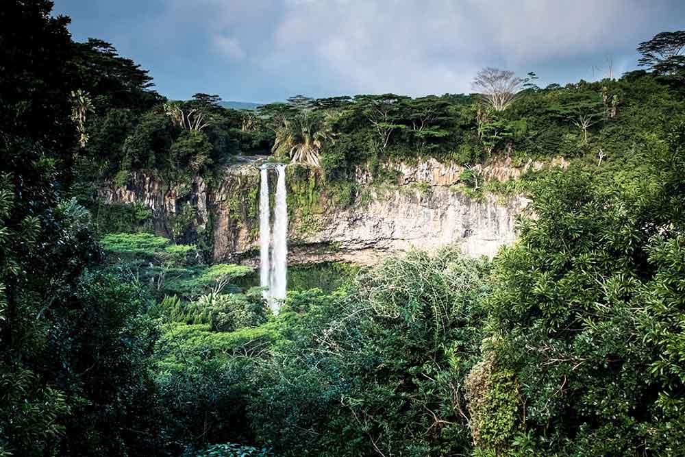 rainforest daintree australia positivitrip