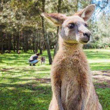 Itinerario Australia 20 giorni – Come scoprire la terra dei canguri