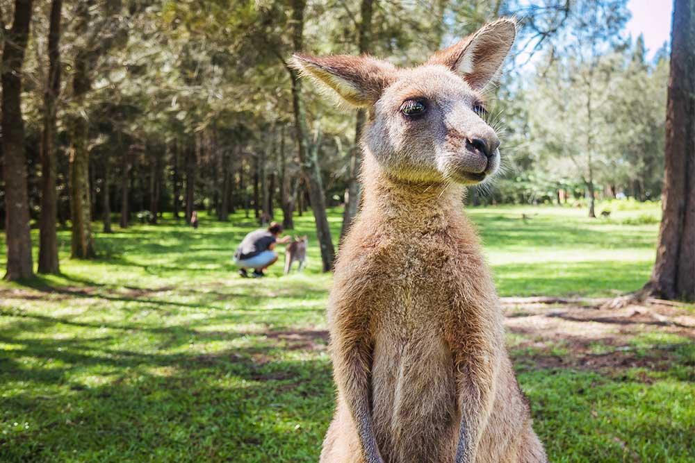 canguri australia positivitrip