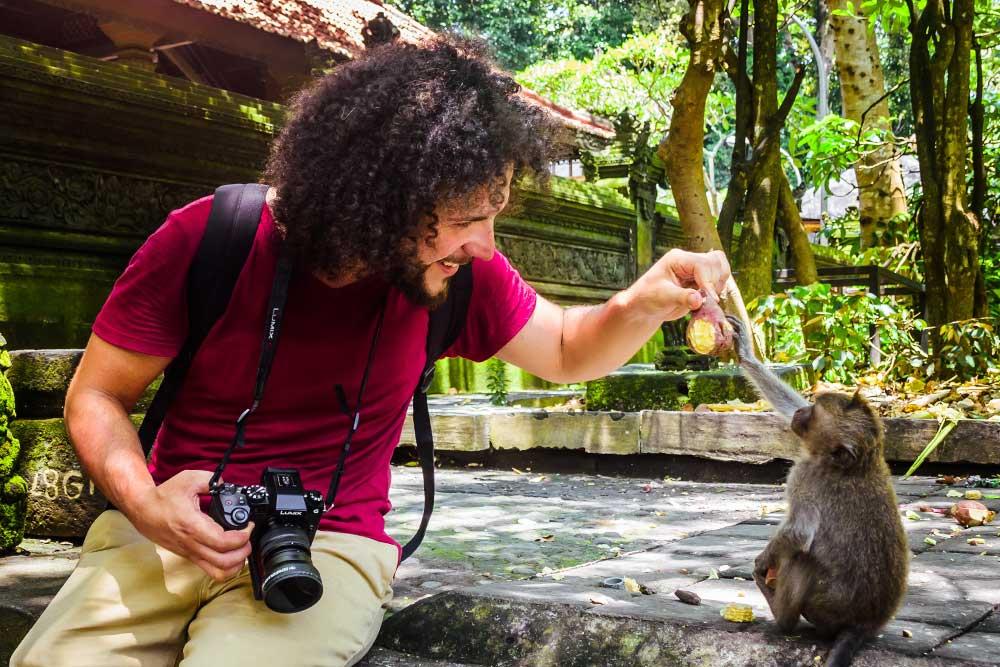 monkey forest bali positivitrip