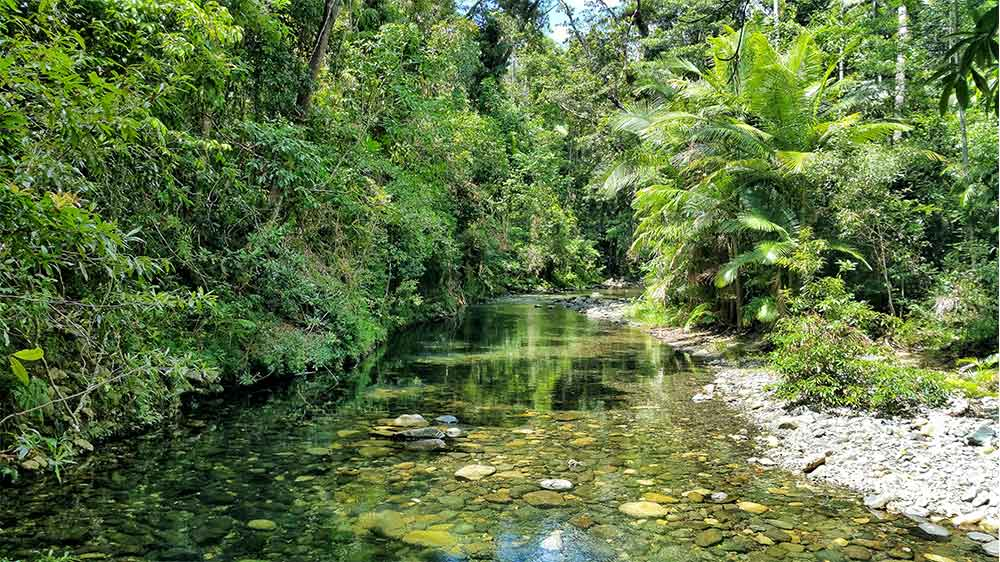daintree forest cosa vedere