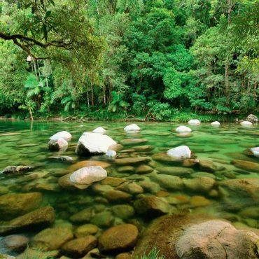 Daintree Forest cosa vedere – La foresta pluviale più antica del mondo