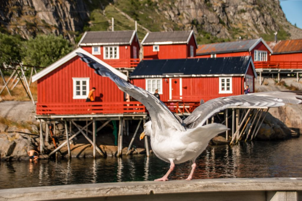 isole Lofoten Norvegia A i Lofoten