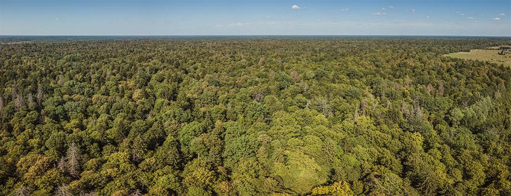Visitare Foresta Bialowieza - Tutto quello che devi sapere
