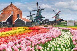 Amsterdam-cosa-vedere-in-4-giorni-mulini-a-vento