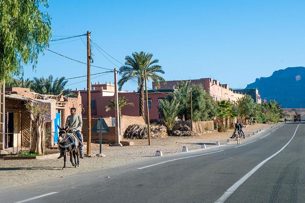 deserto-del-Marocco-asini