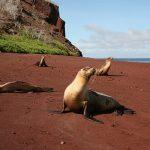 spiagge-nel-mondo-spiaggia-rossa-galapagos