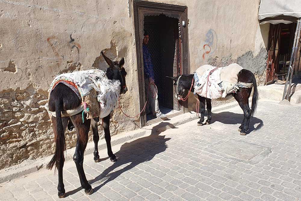 Cosa vedere a Fes marocco