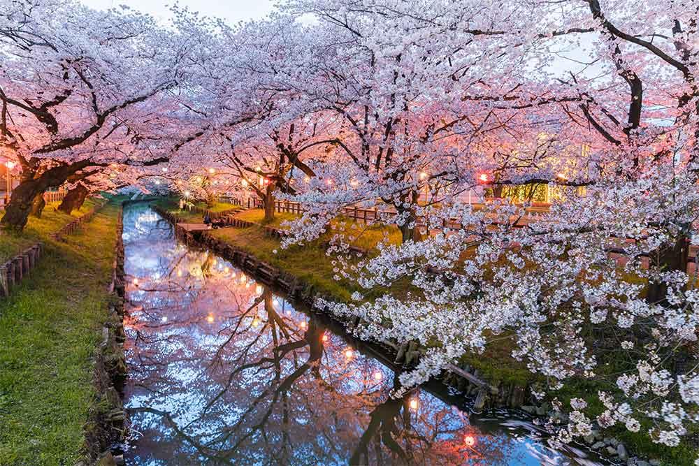kyoto-hanami-ciliegi-in-fiore